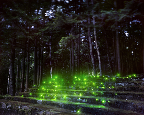Landscape Light Installations