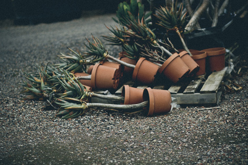 Lisa Sorgini - Broken Botany