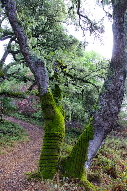 Moss Patterns by Tae Kitakata & Brittany Powell
