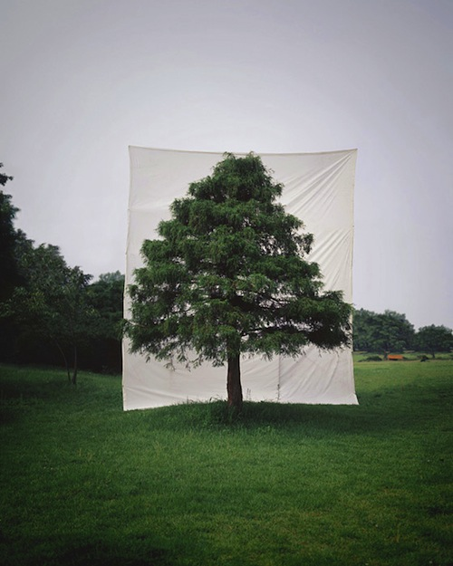 Tree #10, 2006 From the series Tree, Archival Inkjet Print, 10″ × 8″