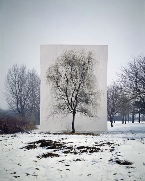 Tree #3, 2006 From the series Tree, Archival Inkjet Print, 40″ × 32″