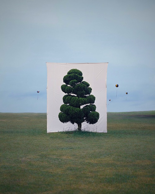 Tree #2, 2006 From the series Tree, Archival Inkjet Print, 50″ × 40″