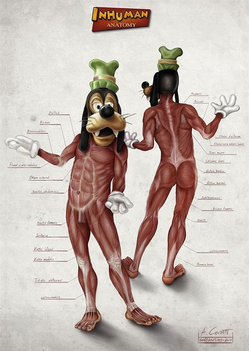 Popular Disney Character Anatomy by Alessandro Conti 3   Inhuman Anatomy