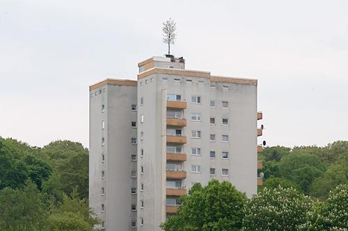 Baumhaus, Installation, Baum auf Hochhaus, 2014