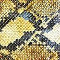 Amazing Snakeheads – Amphetamine Ballads
