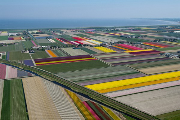 TulipFlying over the Tulips Fields