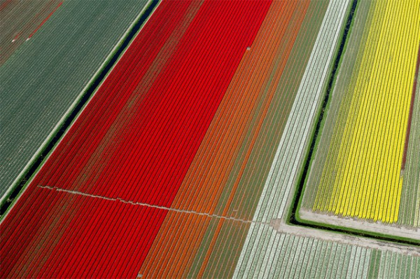 Flying over the Tulips Fields